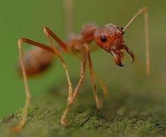 Ant.bmp